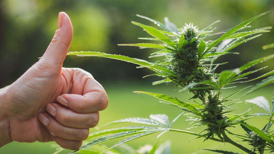 Buy A Weed